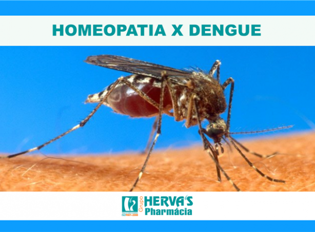 Homeopatia X Dengue
